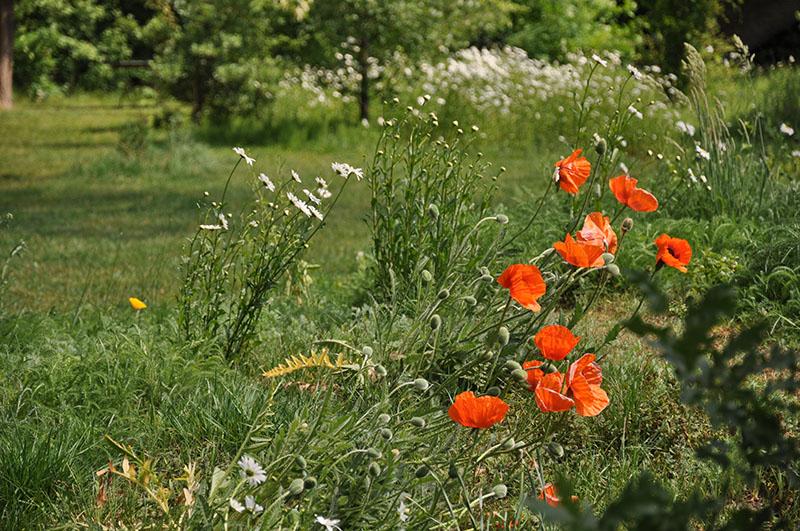 Botanische Tuin Rotterdam : Trompenburg tuinen arboretum u prachtige plantentuin in kralingen