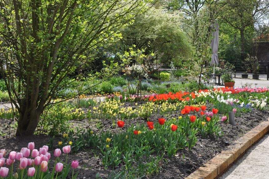 Bollen Bloeiend Voorjaar : Zondagwandeling maart voorjaarsbloeiende bollen u trompenburg